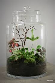 1374 best Terrariums and Succulents images on Pinterest | Gardens, Plants  and Beautiful