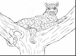 Small Picture awesome leopard coloring pages with cheetah coloring page