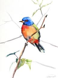 painted bunting original watercolor painting 12 x 9 in colorful birds blue