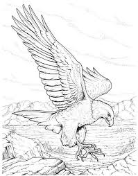 Bald Eagle Coloring Pages Realistic Coloringstar