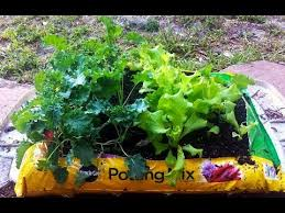 garden in a bag. Urban Garden Project - Growing Vegetables Out Of A Potting Soil Bag (part 2) YouTube In