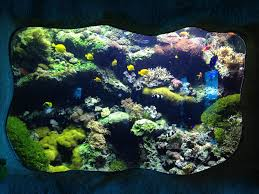 Cool Aquariums Cool Aquarium Fish Tanks Very Cool Pinterest Aquariums
