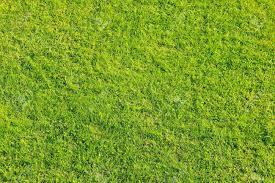 grass field texture. Texture Of Green Grass For Football Field Stock Photo - 9306594