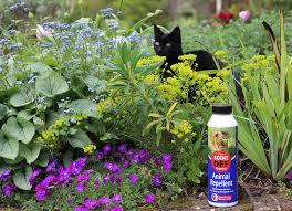 how to keep cats off gardens garden world
