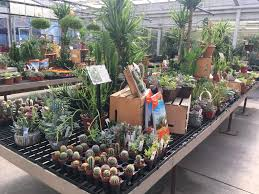 so today i took a trip to a place called gales garden center and they had a pretty good selection on succulents and cacti