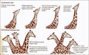 Lamarck Vs Darwin Theories Of Species Development Biology