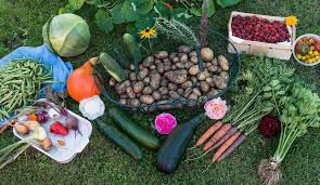 Planning For Your Fall Crops  Start Now  High Mowing Organic Fall Garden Crops