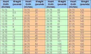 55 Circumstantial Boer Goats Weight Chart