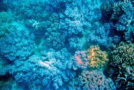 underwater photo essay great barrier reef the little backpacker
