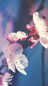 Flower wallpaper, Iphone wallpaper ...