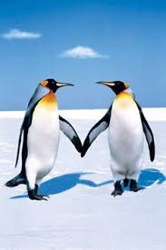 two penguins holding hands. Perfect Holding Penguin Love On Two Penguins Holding Hands