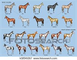 Horse Color Chart Stock Illustration