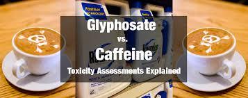 Glyphosate Vs Caffeine Acute And Chronic Toxicity