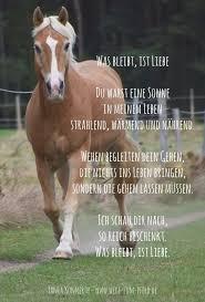 Was Bleibt Ist Liebe Horselogy Pferde Lustige Pferde Und Pferde