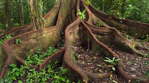 Image result for root system in plants images