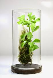 one of a kind artisan terrariums of local plants and moss inside repurposed  found and heirloom glass vessels.