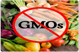 gmos archives ergo chef blog ban gmo1