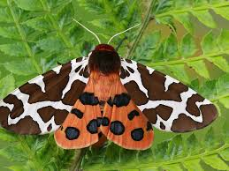 What Did Moths Do Before Lights 10 Fascinating Little Known Moth Facts