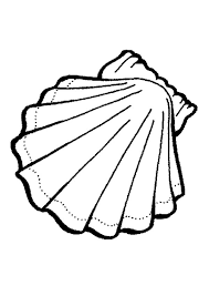 Small Picture Exquisite Calico Scallop Seashell Coloring Page Download Print