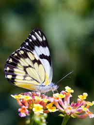 Butterfly on Flower Wallpaper - iPhone ...