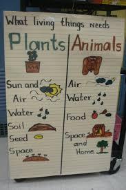 Plants And Animals Needs Anchor Chart Kindergarten Science
