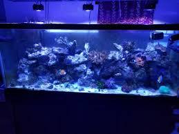 Kessil Aquarium Light My 150 Under Kessil A360x Reef2reef Saltwater And Reef