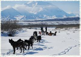 ak dog sled tours