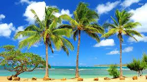 palm trees desktop backgrounds for free hd wallpaper wallart