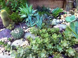 rock garden for low water gardening