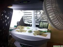 aerogarden cannabis harvest. re: oatbakes\u0027 aerogarden white dwarf+lowryder first time indoor grow cannabis harvest w