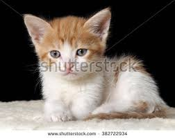 black cats with blue eyes and white paws. Interesting Black Portrait Of A Kitten Muzzle Kitten Large Blue Eyes Cat With Yellow The On Black Cats With Eyes And White Paws G