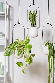 umbra 3 plant wall hanging in 2020