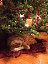Cat Drinking Christmas Tree Water  Home Decorating Interior Cat Themed Christmas Tree