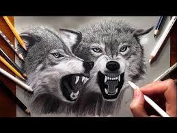 white wolf growling drawing. Pencil Drawing Two Growling Wolves Speed Draw Jasmina Susak Throughout White Wolf