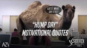 Hump Day Motivational Quotes Sidekick Martial Arts Fitness