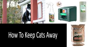 how to repel cats photo