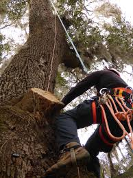 a copper cable must be attached as high in the tree as possible and extend down