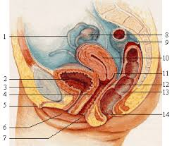 Borttagning av äggstockar biverkningar