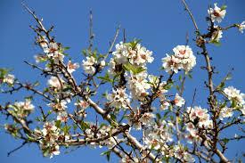 Ricordate di annaffiare i fiori e la spugna con poca acqua regolarmente e tenere lontano da fonti di calore. Dal Fiore Al Frutto Il Ciclo Di Maturazione Della Pianta Biorfarm