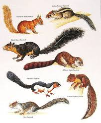 Squirrel Species Chart Pin By Meredith Seidl On Animal Planet Charts Animals