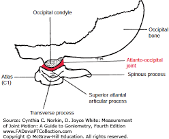 The Cervical Spine Measurement Of Joint Motion A Guide To
