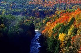 Природа растения и животные Северной Америки Южнее расположены лиственные леса которые охватывают довольно большую площадь территории материка Здесь растут белый и черный дуб ясень