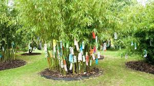 bamboo garden stakes. Garden Bamboo Sticks Full Size Of Ft Stakes Thick Canes Thin . S