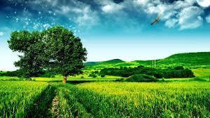 Green Fields Desktop Wallpaper High ...