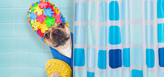 outstanding dog shower ideas pet washing stations