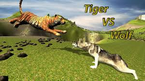 Play wolf vs tiger simulator game online in your browser free of charge on arcade spot. Furious Wolf Vs Jungle Wild Life Survival Sim For Android Apk Download