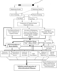 The Pathophysiology Of Cigarette Smoking And Cardiovascular