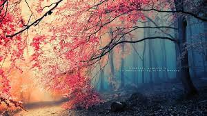 Forest wallpaper, Forest photos ...