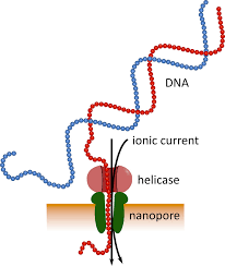 Sequencing Of Mrna From Whole Blood Using Nanopore