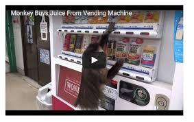 Monkey Uses Vending Machine Gorgeous Unit 4848 Des Moines ELL Teachers K48 Journeys Resources